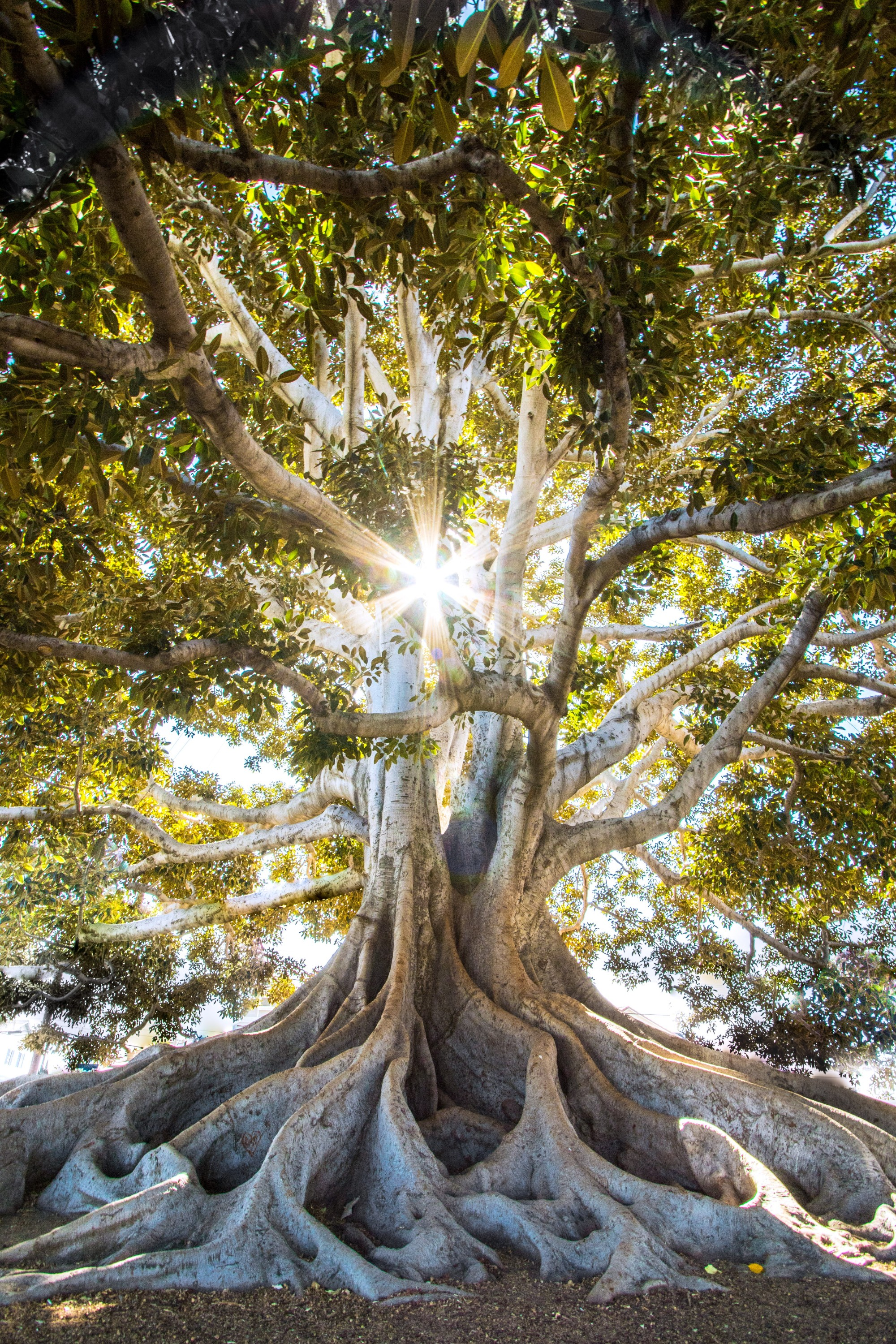 Sun through tree. jeremy-bishop-556948-unsplash – Edited
