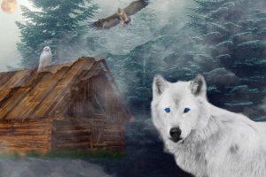 wolf-2292089_1920